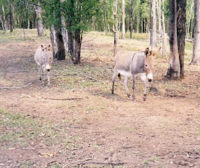 donkey @irene waters 2013