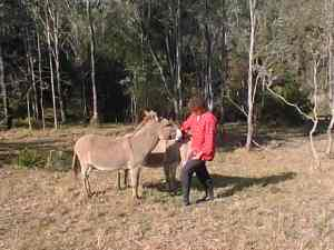 Irene  donkeys 2