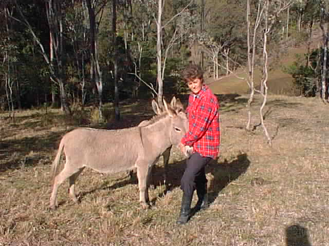 Irene donkeys 3