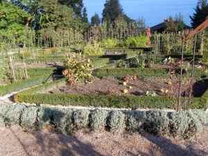 the restaurant's veggie garden. nothing but fresh ©irene waters 2013