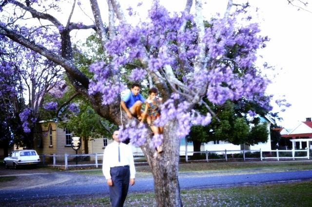 1963.13 JCI,jacaranda tree