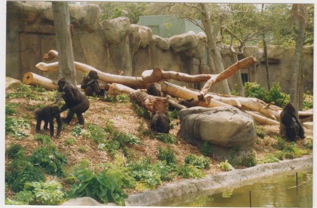 zoo 1987 007