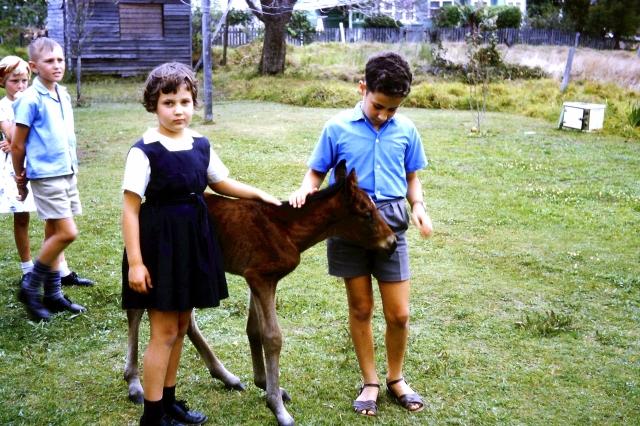 1963.10 C,I,foal JaniceDouglasNeal
